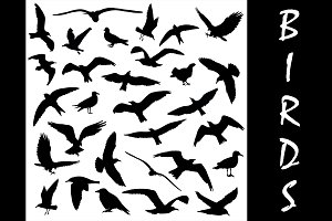 Set of birds silhouettes 30 in 1