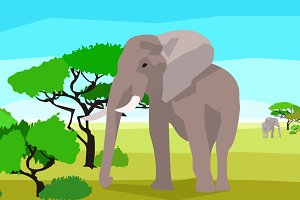 Elephant in a field with trees