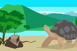 Tortoise near the river