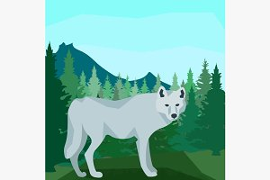 Wolf in the coniferous forest