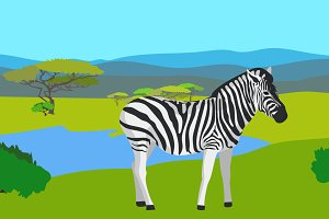 Zebra in the field with green grass