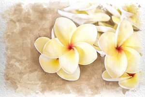 watercolor plumeria flower
