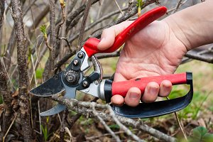 pruning shears in hand