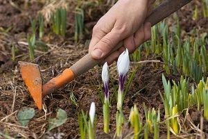 hands weeding flower bed