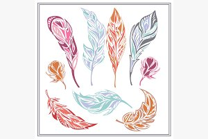 Set feathers  different colors
