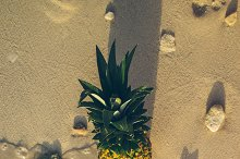Pineapple at Beach in Mexico 18
