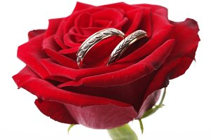 gold rings on a red rose