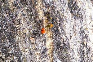 Red Ladybug on Stump: iPhone 6s+
