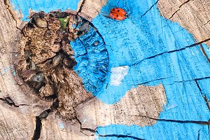 Red Ladybug on Painted Blue Stump