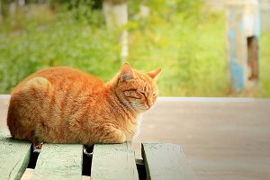 lone red cat on green bench