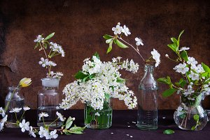 Spring flowers in glass bottles