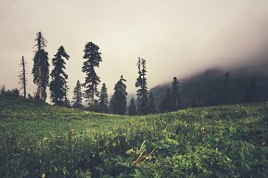 Foggy Mountains forest