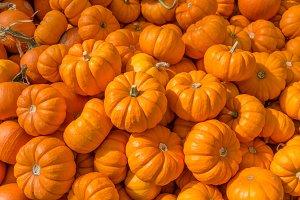 mini pumpkins at the market