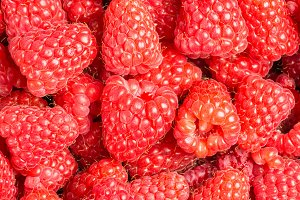 Red raspberries at the market