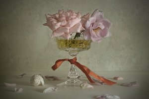 Roses and shell