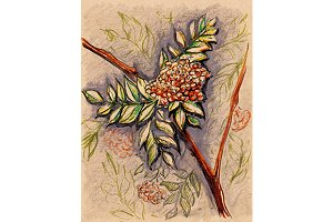 Rowan berry branch craft sketch art