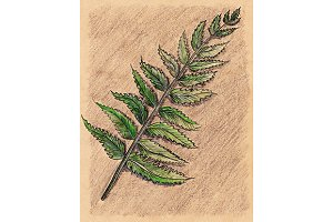 Fern bracken branch botanical sketch