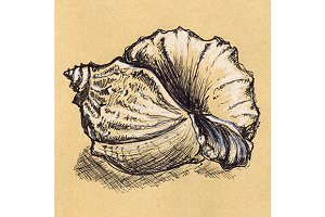 Vintage seashell sketch ink line art