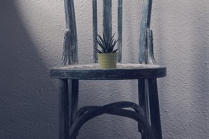 Litle plant on a vintage chair