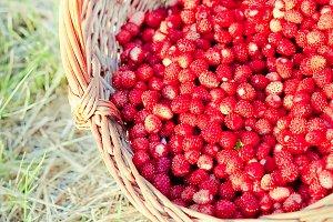 Basket of fresh strawberries