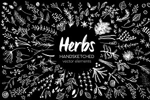 Herbs HandSketched Vector Elements