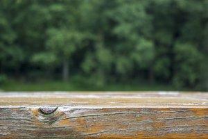 Wood close up I