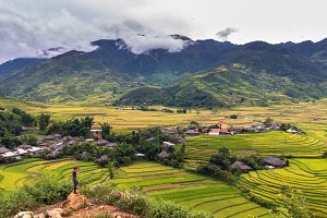 Traveller at Rice fields on terraced