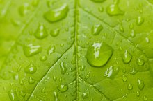 Raindrops on green leaves