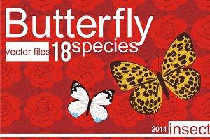 18 Species Butterfly