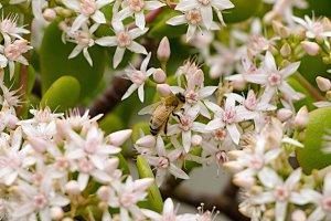 Bee enjoying sunday :)