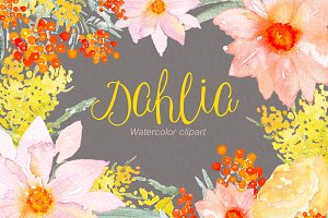 Dahlia orange. Watercolor clipart