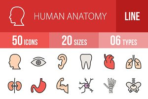 50 Human Anatomy Line Filled Icons