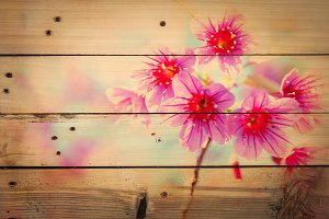 blossom flower on wooden texture