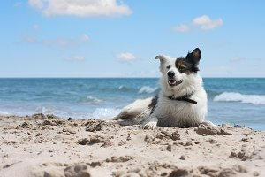 dog on sea