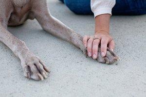 Hand on Dog Paw