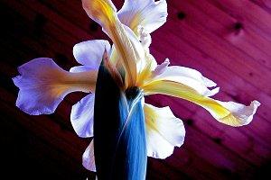 Vivid Flower