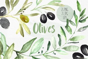 Olives. Watercolor illustrations