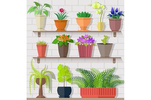Houseplant Set Design Flat Concept