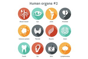 Set #2 icons of human organs