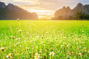 meadow at morning,Mountain