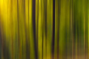 Motion Blur Forest Pack
