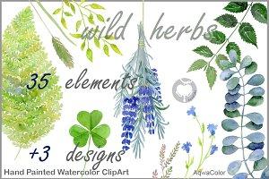 Warecolour clipart Wild herbs