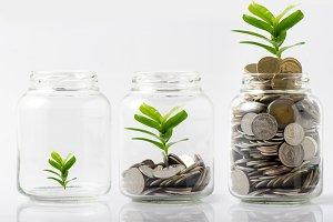Money  plant step