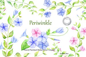 Watercolor clipart Periwinkle
