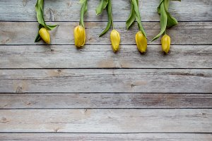 Yellow Tulips on Wood background