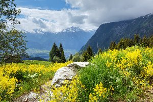 Yellow wild flowers on slope