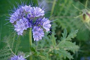 wild flower on meadow
