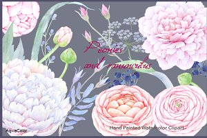 Watercolour clipart Peonies