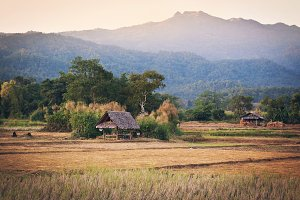 Hut in the farm