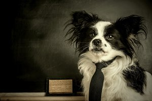 Dog as a school teacher with tie